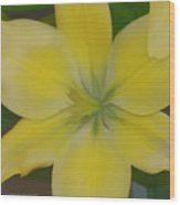 Lilly With Artistic Beauty Wood Print