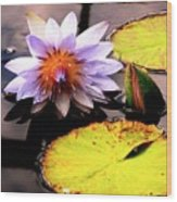 Lillypad In Bloom Wood Print