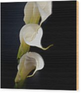 Lillys Wood Print