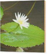 Lily-1 Wood Print