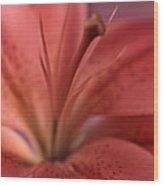 Lily 13 Wood Print