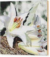 Lily 4 Wood Print