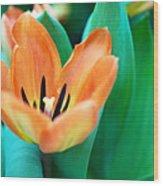 Lily #4 Wood Print
