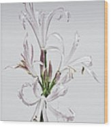 Lily 7 Wood Print by Robert Ullmann