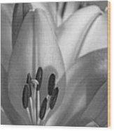 Lily - American Cheerleader 07 - Bw - Water Paper Wood Print