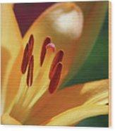 Lily - American Cheerleader 29 Wood Print