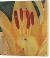 Lily - American Cheerleader 31 Wood Print