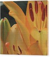 Lily - American Cheerleader 33 Wood Print