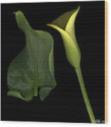 Lily And Leaf Number Two Wood Print