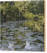Lily Bend On Blind River Wood Print