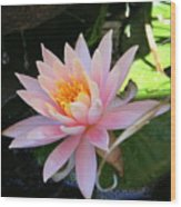 Lily Bloomed Wood Print