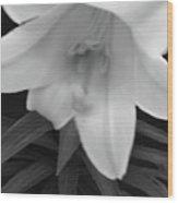 Lily Dawn Wood Print