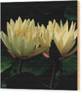 Lily Duet Wood Print