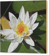 Lily Floating On Pond IIi Wood Print