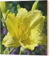 Lily Flower Art Print Canvas Yellow Lilies Baslee Troutman Wood Print
