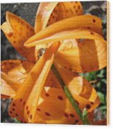 Lily Flower Art Prints Tiger Lilies Giclee Baslee Troutman Wood Print