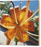 Lily Flower Artwork Orange Lilies 3 Giclee Art Prints Baslee Troutman Wood Print