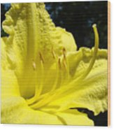 Lily Flower Artwork Yellow Lilies 1 Giclee Art Prints Baslee Troutman Wood Print