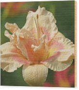 Lily Flower - Daylily Wood Print