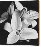 Lily Flower In Black And White Wood Print