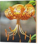 Lily Flowers Art Orange Tiger Lilies Giclee Baslee Troutman Wood Print