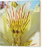 Lily Flowers Art Prints Yellow Lillies 2 Giclee Prints Baslee Troutman Wood Print