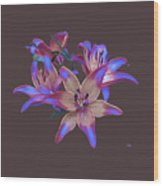 Lily Flowers Blue Maroon Wood Print