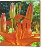 Lily Flowers Garden Art Prints Orange Lilies Floral Baslee Troutman Wood Print