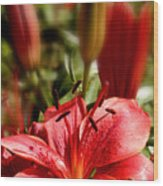 Lily Garden Wood Print