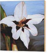 Lily I Wood Print