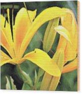 Lily - Id 16217-152018-5631 Wood Print