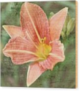 Lily In A Haze Wood Print