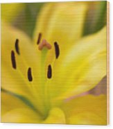 Lily In Close-up Wood Print