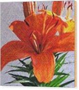 Lily In Color Pencil Wood Print