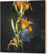 Lily In Monets Garden Wood Print