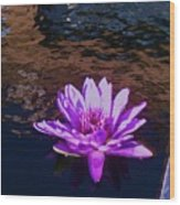 Lily In Pond Wood Print