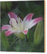 Lily In The Dark Wood Print