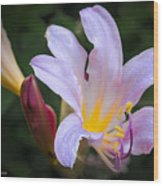 Lily In The Rain By Flower Photographer David Perry Lawrence Wood Print