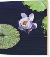 Lily Love II Wood Print