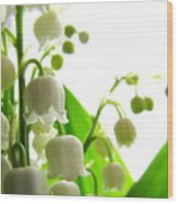 Lily Of The Valley II Wood Print