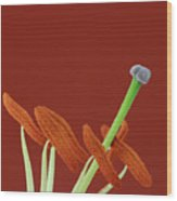 Lily On Red Wood Print