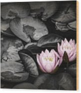 Lily Pad Blossoms Wood Print