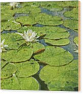 Lily Pad Flowers Wood Print