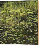 Lily Pad Place Wood Print