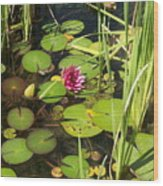 Lily Pad Pond In High Noon Sun Wood Print