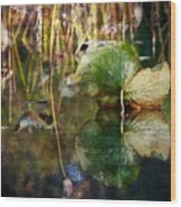 Lily Pad Reflection Oil Wood Print