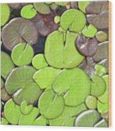 Lily Pads #1 Wood Print