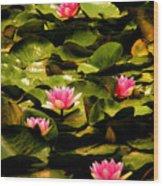 Lily Pads Above Sunken Treasure Wood Print