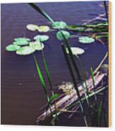 Lily Pads And Reeds Wood Print