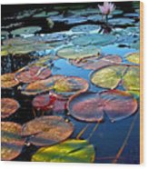 Lily Pads At Sunset Wood Print